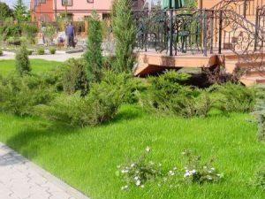 Как облагородить садовый участок