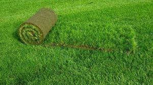 Рулонный газон и растения для газона