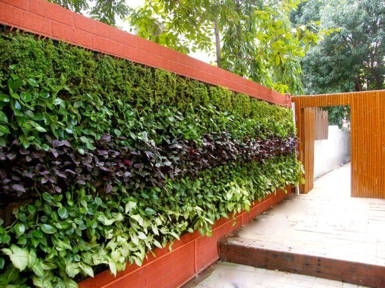 Живая стена на садовом участке