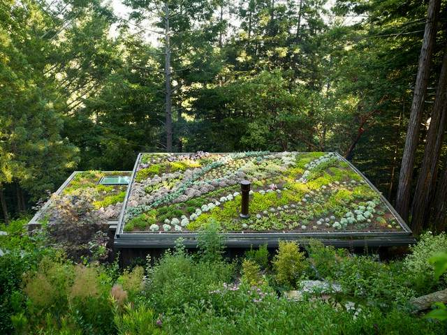 Оригинальная зеленая крыша