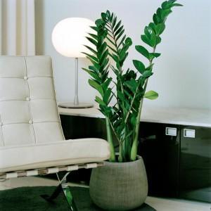 Фитодизайн: уголок природы у вас дома