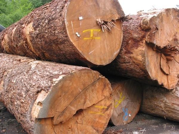 Свойства древесины в строительстве