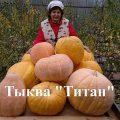 Агротехника для титана (легендарная тыква)