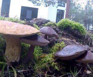 Выращиваем грибы в своем саду