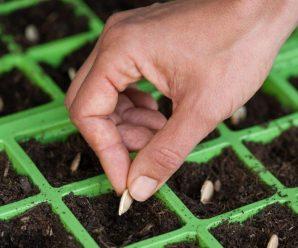 Какие бывают ошибки при посеве семян