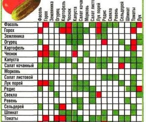 Схема простой совместной посадки овощей