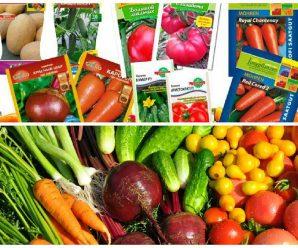 Выбор семян готовых к посеву (вопрос-ответ)