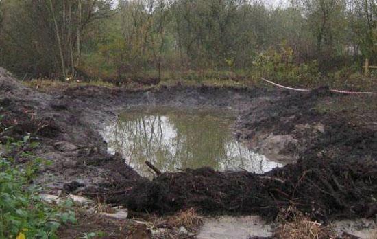 Болотные и торфяно - болотные почвы