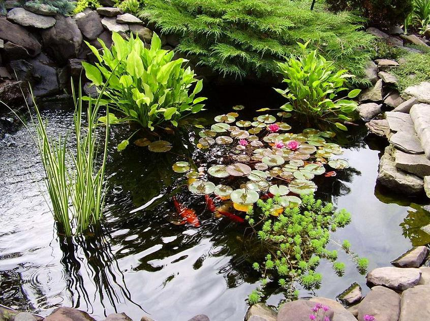 Как подготовить водные растения к зиме