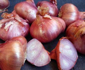 Лучшие сорта сладкого лука и особенности его выращивания и ухода