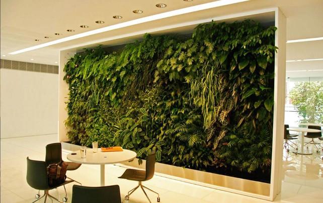 Вертикальное озеленение в помещении. Фитостена
