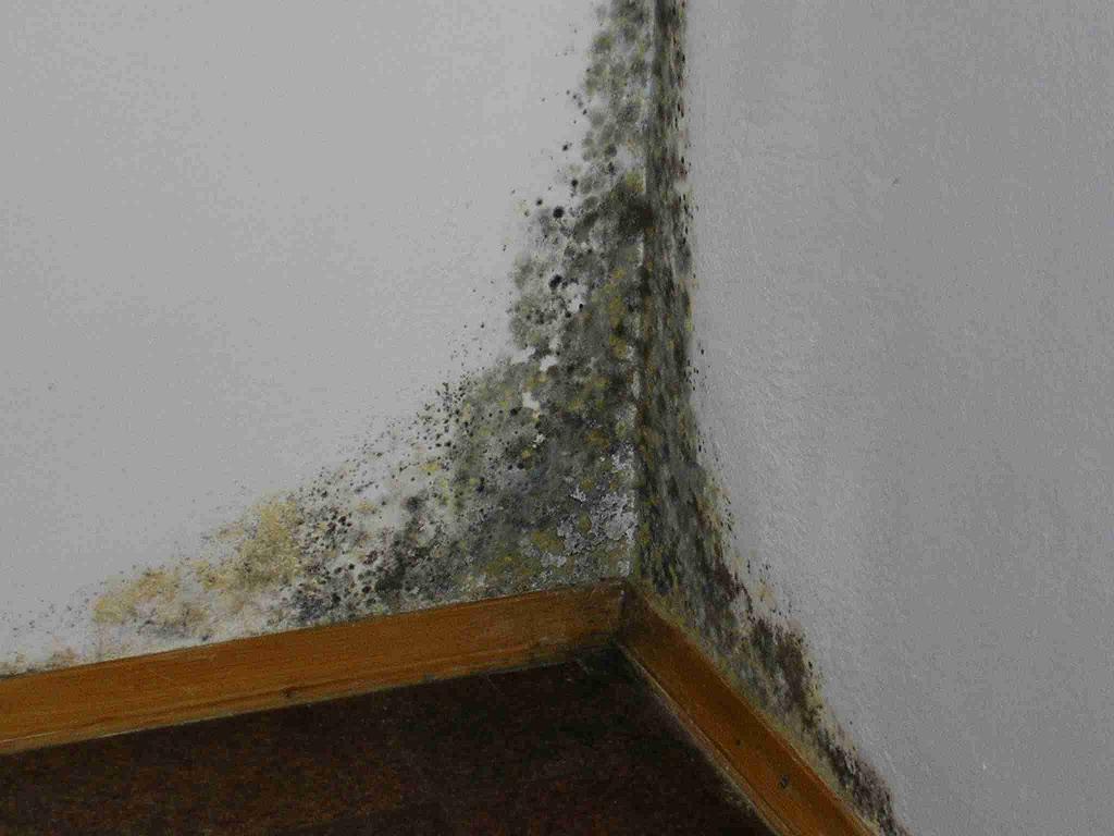 Конденсат на стенах с плесенью
