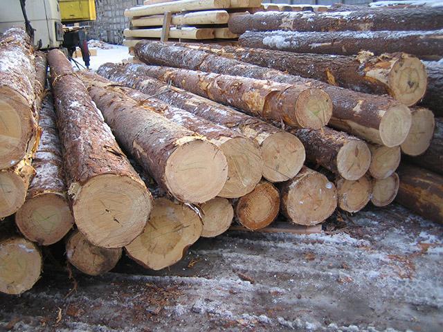 Заготовка древесины для строительства бани
