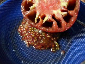 Заготовка семян помидоров